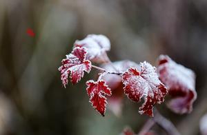 """霜降,霜降,已是秋之余韵,正当""""露深花气冷,霜降蟹膏肥"""""""