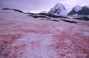 """南极惊现""""西瓜雪"""",粉红色的背后不是浪漫而是隐忧"""