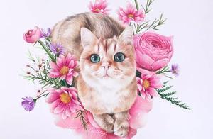 彩铅——小猫和它的花