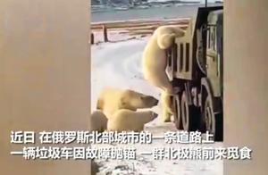 全球气温上升冰川融化,可怜的北极熊无处觅食,竟然翻垃圾车