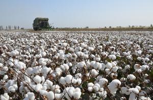 试问和新疆纯天然棉花一样的纯天然奶茶谁不爱?