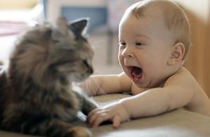 辟谣:家里有宝宝就不能养猫!