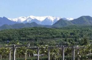 """蓝天白云、青山雪顶,""""太白积雪""""美成一幅风景画"""