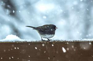 """三首写雪的诗词,全篇没有一个""""雪""""字,一幅雪景却已跃然眼前"""
