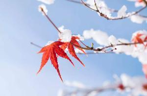 又是一年立冬时,十首立冬的古诗词里,感受立冬的诗意