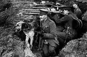 两次世界大战中勇敢的狗狗做着危险的工作