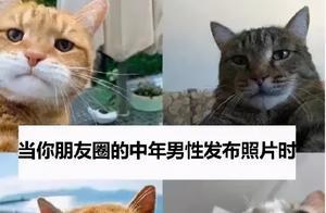 中 年 猫 咪 自 拍 图 鉴