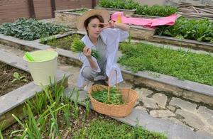 """张馨予婚后开庄园,穿""""老汉衬衫""""变农业博主,超大花园种菜真豪"""