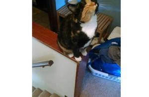 家的猫咪终于学会捉老鼠了