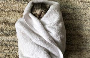小奶猫睡觉,太治愈了