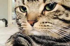 """""""猫咪怼脸拍""""空降热搜,在线看猫片,这才是猛男干的事儿"""