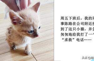 幼猫的喂养清单:喂食方法、住所搭建和入厕指导