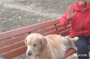 不知主人去世,半年来导盲犬仍坚持在公园长椅帮主人占座……