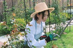 33岁张馨予忙种花种菜,自律的生活令人羡慕,这才是向往的生活