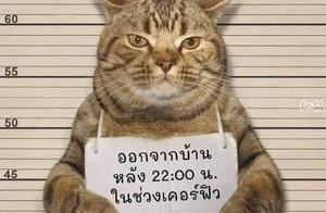 泰国警方逮捕了一只疫情期间,违反夜间外出禁令的猫
