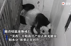 美国动物园回应大熊猫美香母子近况