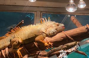 开空调、装地暖、泡温泉…看看重庆市动物园的小动物们如何御寒过冬