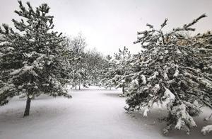 雪中最美是雾凇,玉树琼花,惊艳了汾河湿地冬日!