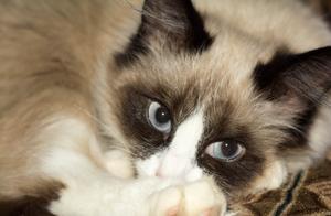 泰国猫咪因违反禁令被抓,这么可爱还不快来看看!