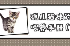 捡到小奶猫(下):如何养成一只健康亲人的小猫咪