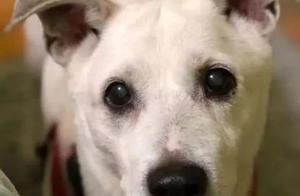 狗狗坚持11年趴在窗前等主人,11年后狗去世,窗前再无那个身影