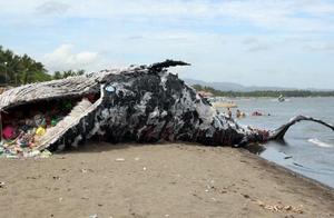 海滩上出现巨大鲸尸!身体里堆满塑料垃圾,令所有人惭愧