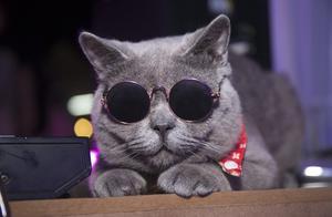 """专家解读""""猫经济"""":谈恋爱不如撸猫,养猫比养对象省钱!"""