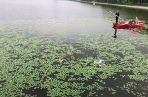 壮观!暴雨过后,长春南湖公园突然出现很多大鱼