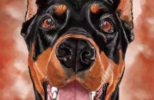 冬天最怕冷的几种狗狗,你家爱犬上榜了吗?