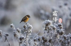 夜读   霜降:恍然暮秋至,静候冬日来