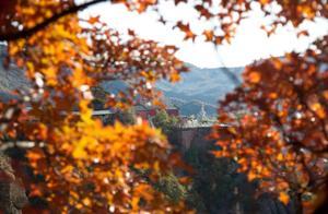 秋天出游,北京最全的红叶观赏攻略!快来看