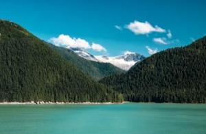 全球五大原始森林,与地球之肺一同呼吸…