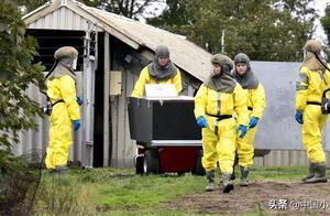 法媒:最大貂皮生产国丹麦杀掉所有水貂 冠状病毒基因水貂身上突变再传人忧疫苗失效