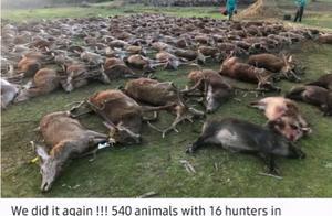 500多只动物被猎杀!16名西班牙猎人在葡萄牙狩猎屠杀引众怒