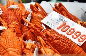 对澳反制再扩大?数万吨龙虾滞留中国海关,澳媒:或成打击新目标