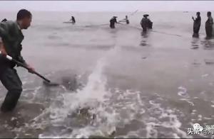 贪吃的江豚觅食误入拖网,有爱的渔民全部放生