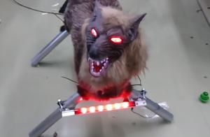 """日本制造惊悚机器人""""怪兽狼"""""""