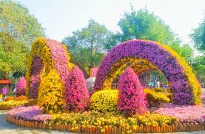 赏菊十二月,悠然青秀山——菊花展