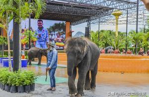 失去了中国游客,泰国大象徒步150公里回乡,我看这事应该怪美国