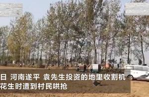承包商500亩花生遭数百村民哄抢,晚上打灯来偷,报警也没用