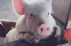 猪肉价格已连续两个多月下降,网友评论还是那么贵