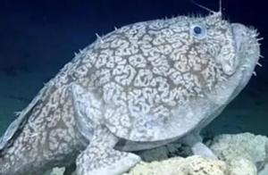 """海底一万米到底有多恐怖?科学家:那里全都是被""""封印""""的怪物"""