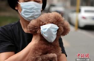 宠物也会感染新冠病毒?专家:尚缺乏充分的实验证据