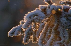 张家界今冬首场雾凇抵临,银装素裹美如画