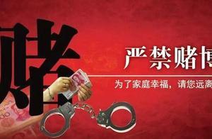 """""""斗鸡""""涉嫌赌博?3人判刑30人行政处罚"""