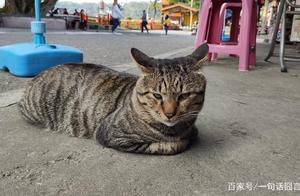 网友拍到猫咪打哈欠瞬间,真的好凶