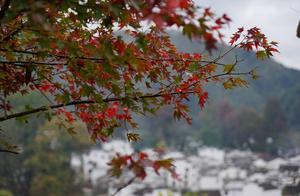 风吹一片叶 万物已惊秋   江西婺源赏秋攻略