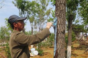 树干腐烂溃疡治疗后为什么要刷树木伤口愈合剂
