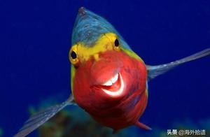 野生动物摄影大赛:长颈鹿抢镜和笑容可掬的鹦鹉鱼