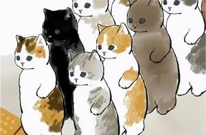 一起来看看打工猫的日常吧